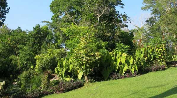 Photo Guillermo Piñeres Botanical Garden: See the fauna & flora of the Colombia Caribbean