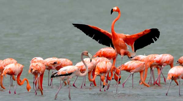 Photo Los Flamencos Fauna and Flora Sanctuary is home to many species of aquatic birds.
