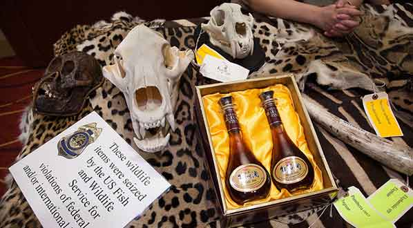 Photo Federal agents show items from the illegal trade in wildlife at an SCB conference