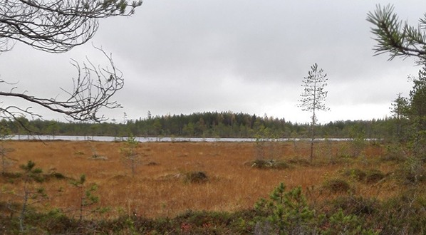 Photo Restored peatland near Nälkäneva and natural state peatland.